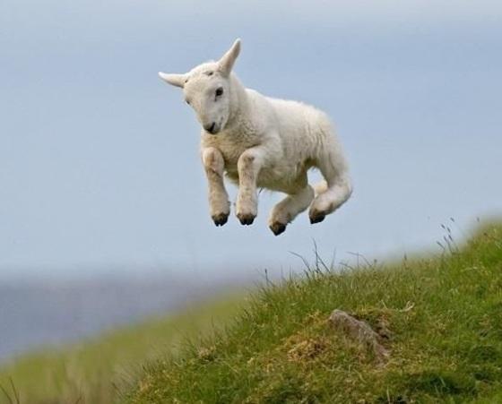 airborn lamb